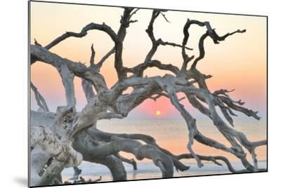 Sunrise Sentinel-Steve Vaughn-Mounted Photographic Print