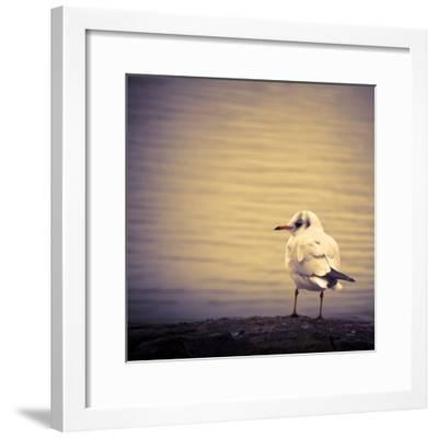 Are You Watching Me?-Joanna Pechmann-Framed Photographic Print