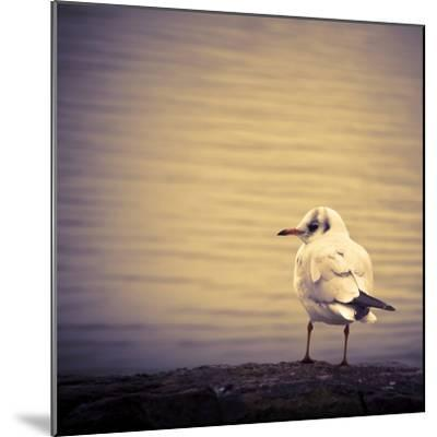 Are You Watching Me?-Joanna Pechmann-Mounted Photographic Print