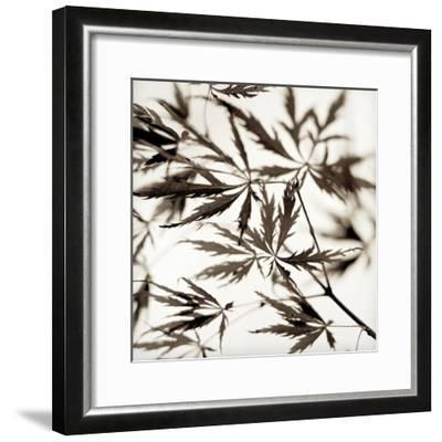 Florison #50-Alan Blaustein-Framed Photographic Print