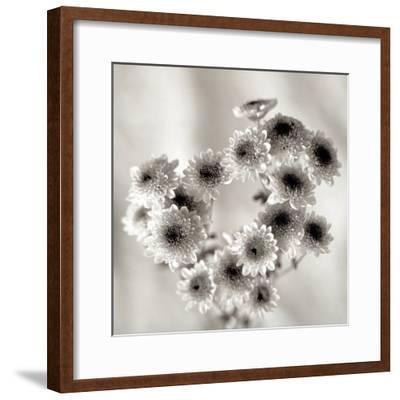 Florison #58-Alan Blaustein-Framed Photographic Print