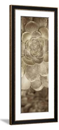 Florison #91-Alan Blaustein-Framed Photographic Print