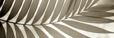 Florison #98-Alan Blaustein-Framed Photographic Print