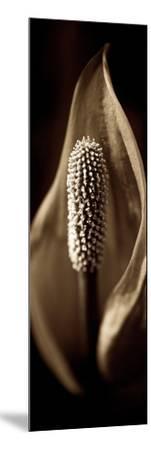 Florison #95-Alan Blaustein-Mounted Photographic Print