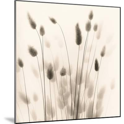 Italian Tall Grass No. 1-Alan Blaustein-Mounted Photographic Print