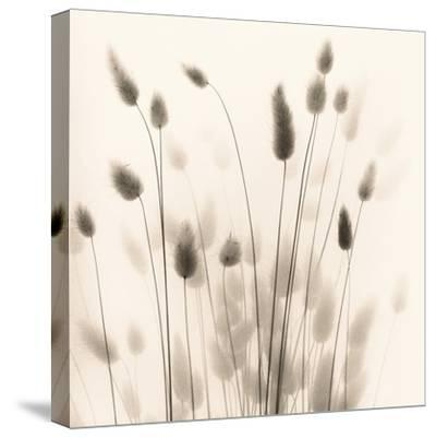 Italian Tall Grass No. 1-Alan Blaustein-Stretched Canvas Print