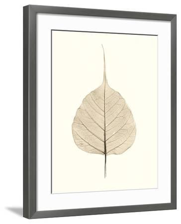 India Ficus-Alan Blaustein-Framed Photographic Print