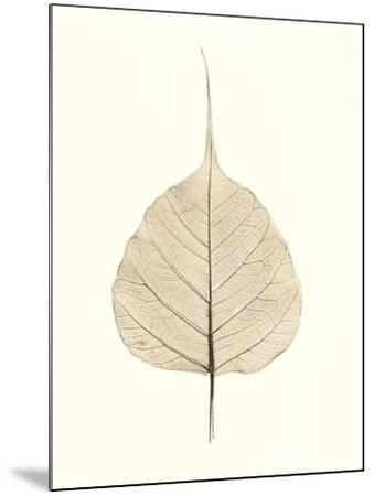 India Ficus-Alan Blaustein-Mounted Photographic Print