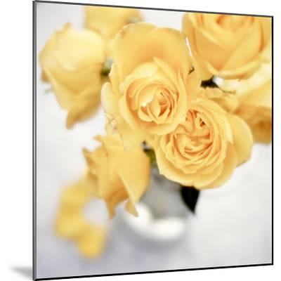 Floral Color #21-Alan Blaustein-Mounted Photographic Print