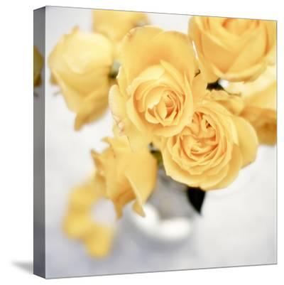 Floral Color #21-Alan Blaustein-Stretched Canvas Print
