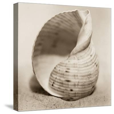 La Playa No4-Alan Blaustein-Stretched Canvas Print