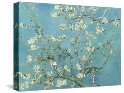 Almond Blossoms, 1890-Vincent van Gogh-Stretched Canvas Print