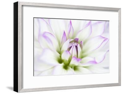 Dahlia-Dawn LeBlanc-Framed Photographic Print