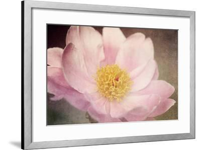 Peony in the Park-Dawn LeBlanc-Framed Photographic Print
