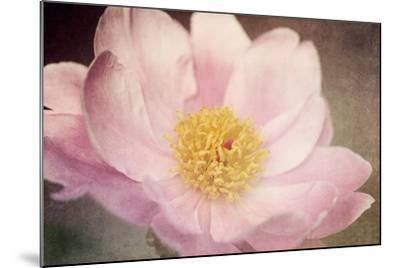 Peony in the Park-Dawn LeBlanc-Mounted Photographic Print