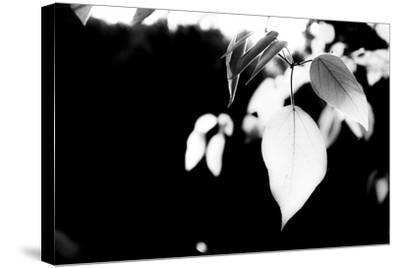 White Leaves-Bergina Leka-Stretched Canvas Print