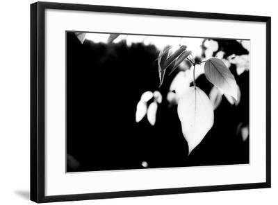 White Leaves-Bergina Leka-Framed Photographic Print