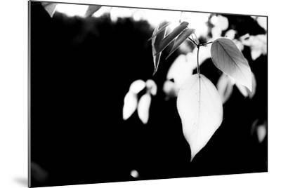 White Leaves-Bergina Leka-Mounted Photographic Print