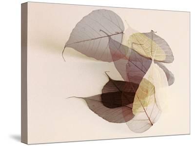 Sauvignon Blanc-Durwood Zedd-Stretched Canvas Print