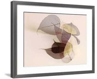 Sauvignon Blanc-Durwood Zedd-Framed Photographic Print