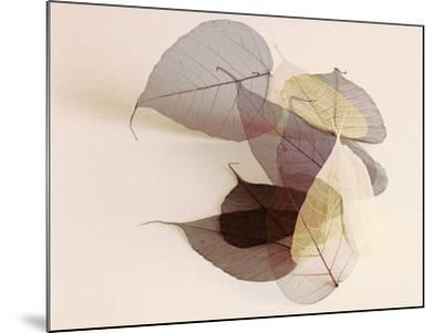 Sauvignon Blanc-Durwood Zedd-Mounted Photographic Print