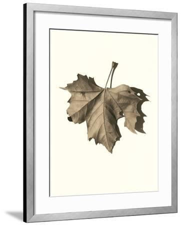 Norway Maple-Alan Blaustein-Framed Photographic Print