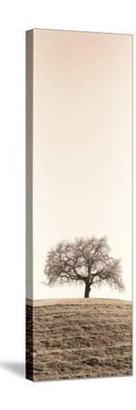 Lone Oak Tree-Alan Blaustein-Stretched Canvas Print