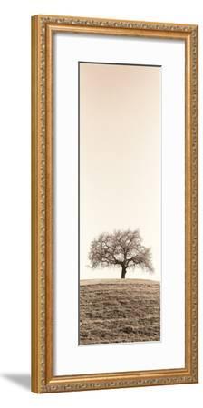 Lone Oak Tree-Alan Blaustein-Framed Photographic Print