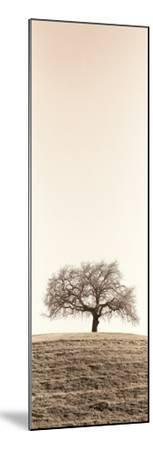 Lone Oak Tree-Alan Blaustein-Mounted Photographic Print