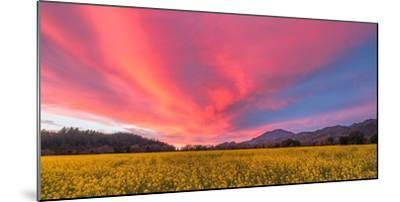 Spring Sunset Napa Valley-Elizabeth Carmel-Mounted Photographic Print