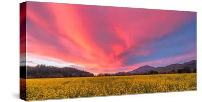 Spring Sunset Napa Valley-Elizabeth Carmel-Stretched Canvas Print
