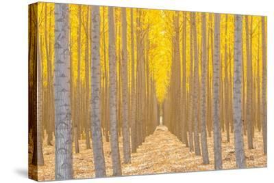 Silence Is Golden-Ross Lipson-Stretched Canvas Print