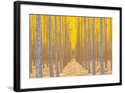 Silence Is Golden-Ross Lipson-Framed Photographic Print