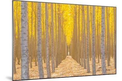 Silence Is Golden-Ross Lipson-Mounted Photographic Print