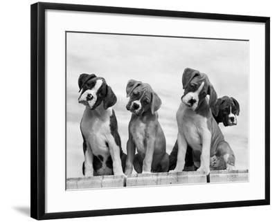 Wonder-Sharon Beals-Framed Photographic Print