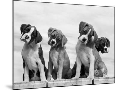 Wonder-Sharon Beals-Mounted Photographic Print
