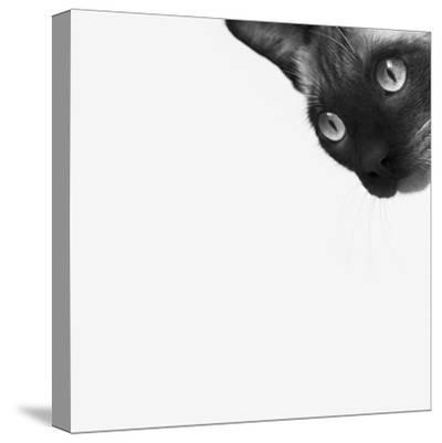 Be Brave-Jon Bertelli-Stretched Canvas Print