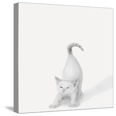 Bonjour!-Jon Bertelli-Stretched Canvas Print