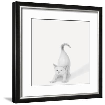 Bonjour!-Jon Bertelli-Framed Photographic Print
