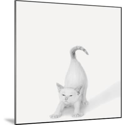 Bonjour!-Jon Bertelli-Mounted Photographic Print