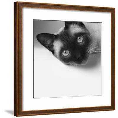 Hey!-Jon Bertelli-Framed Photographic Print