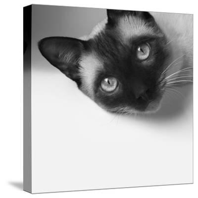 Hey!-Jon Bertelli-Stretched Canvas Print