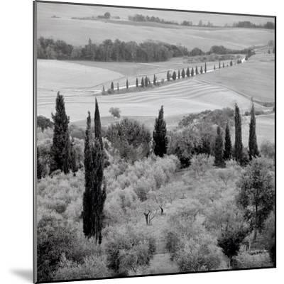 Tuscany #6-Alan Blaustein-Mounted Photographic Print