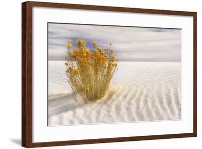Dunescape #2-Deborah Loeb Bohren-Framed Photographic Print
