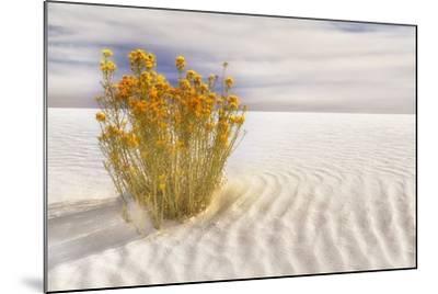 Dunescape #2-Deborah Loeb Bohren-Mounted Photographic Print