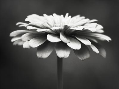 Spellbinding-Carolyn Cochrane-Framed Photographic Print