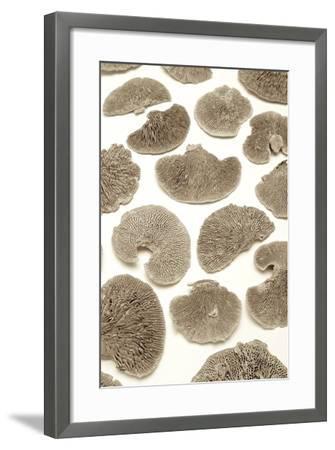 Garden Bloom #19-Alan Blaustein-Framed Photographic Print