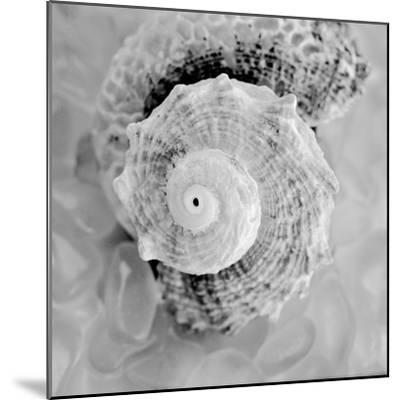 Crystal Cove #41-Alan Blaustein-Mounted Photographic Print