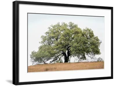 Oak Tree #72-Alan Blaustein-Framed Photographic Print