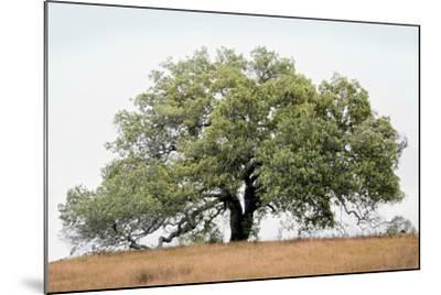 Oak Tree #72-Alan Blaustein-Mounted Photographic Print